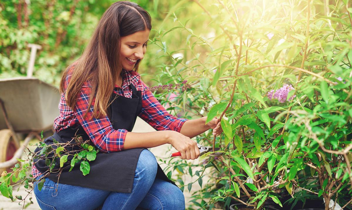 Frau Schneidet Pflanzen Zu