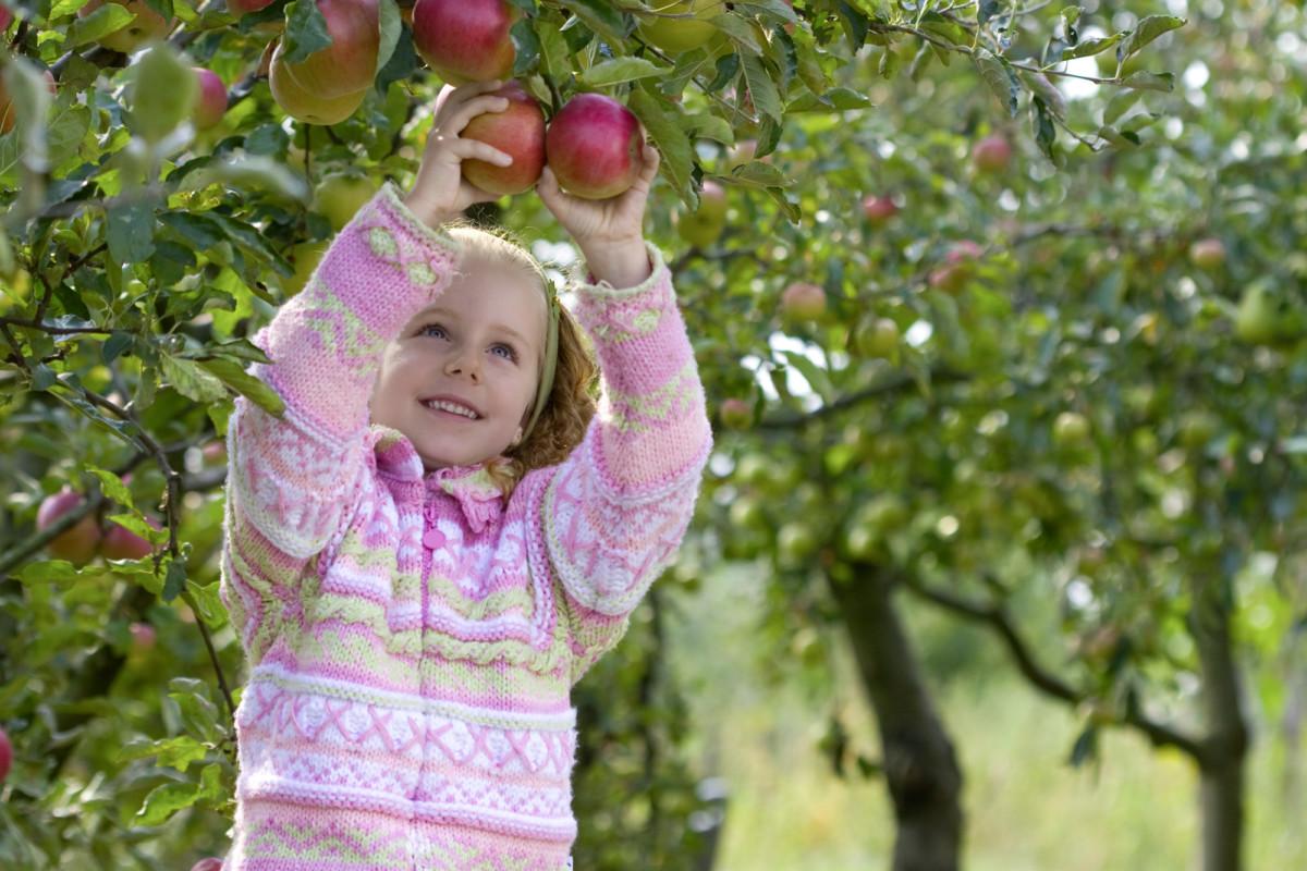Mädchen Pflückt Apfel