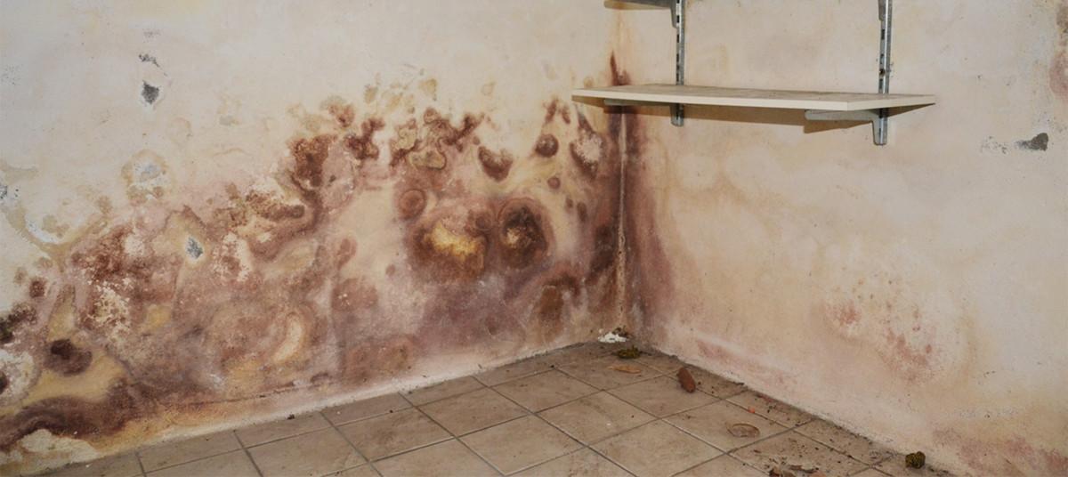 Was Tun Bei Feuchten Mauern?
