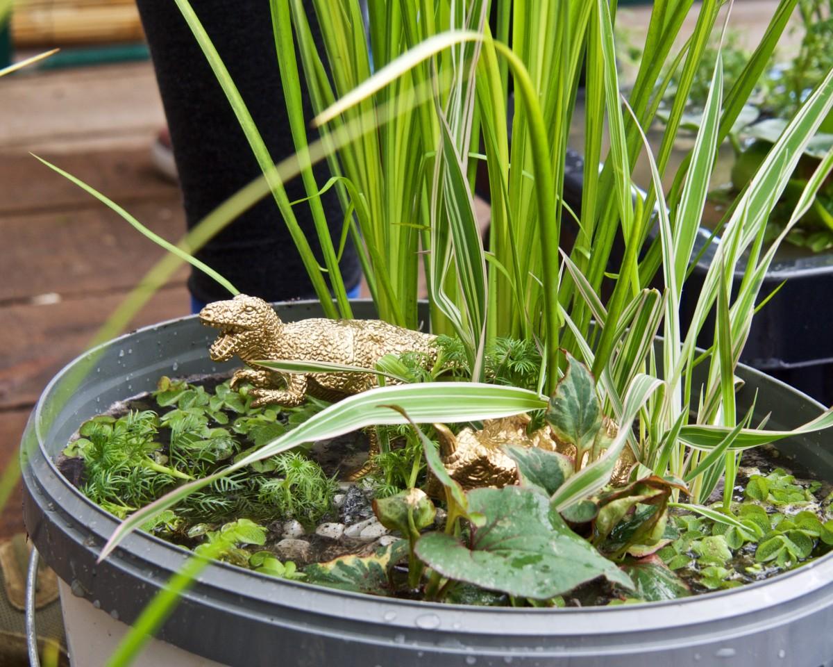 Klein, Aber Fein: Der Mini-Gartenteich