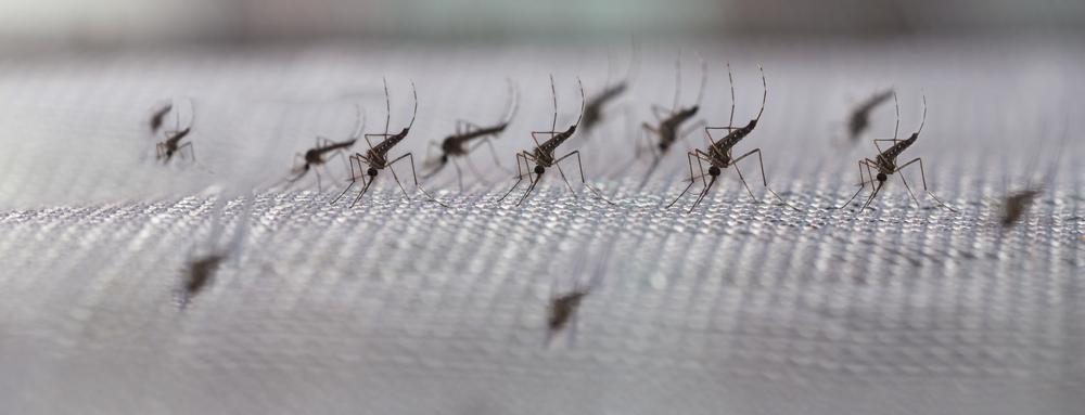 Insektenschutz – So Wird Das Haus Sicher