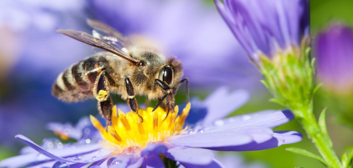 Bienenschutz Im Eigenen Garten