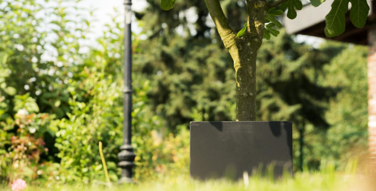 Mit Know-How Zum Blühenden Traumgarten
