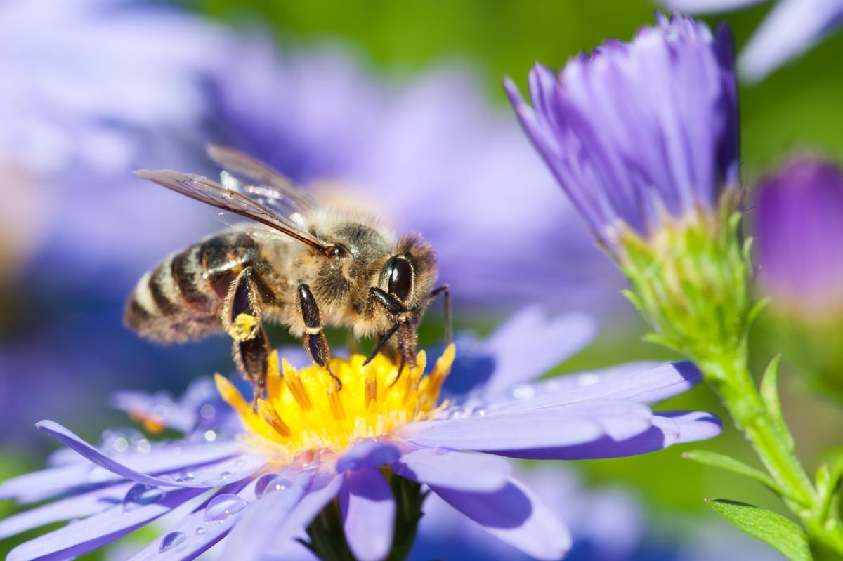 Klares Zeichen Für Bienenschutz