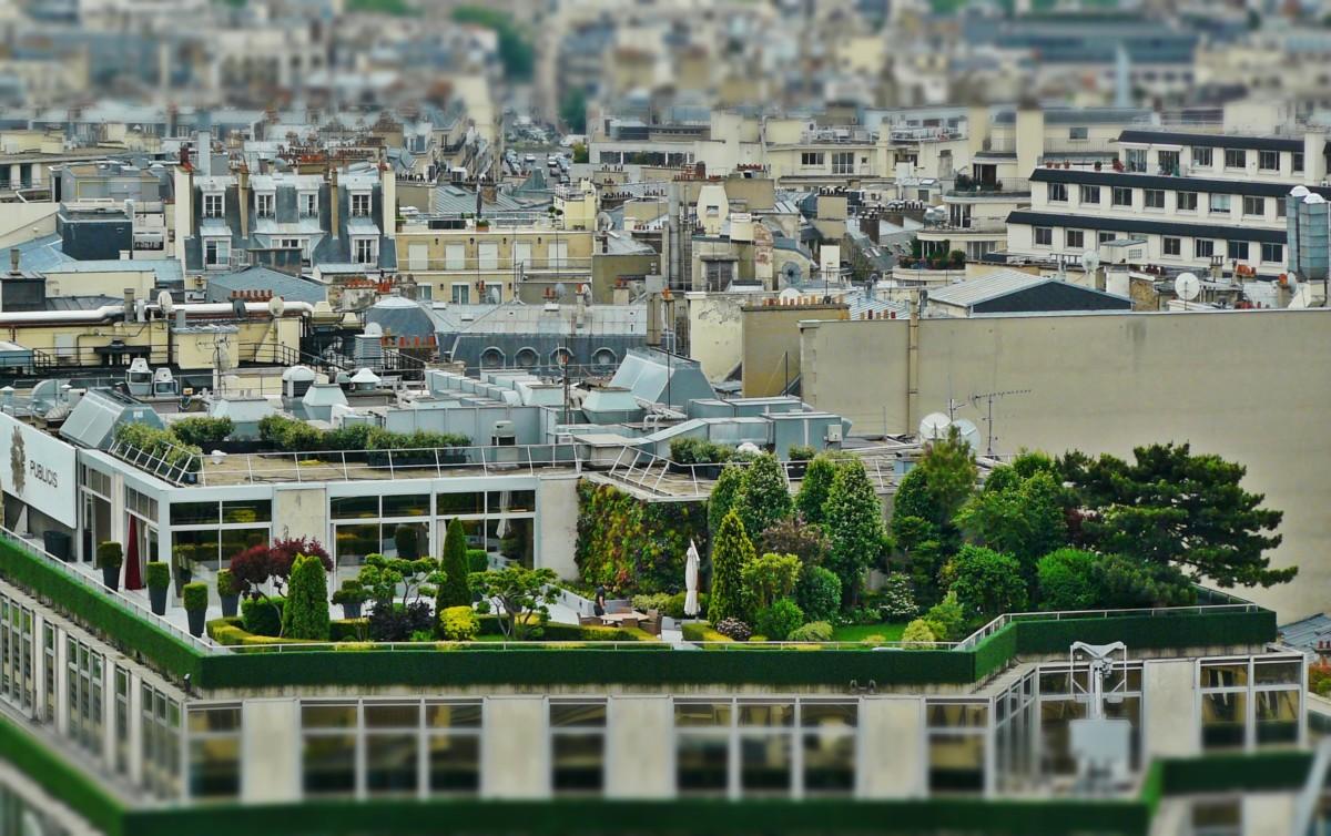 Grüne Oase Der Stadt