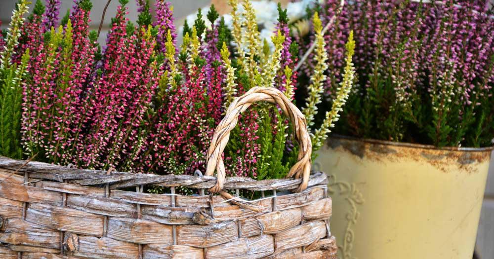 Paradies Für Gartenfreunde