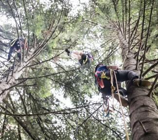 Mit dem Baumkauf Gutes tun